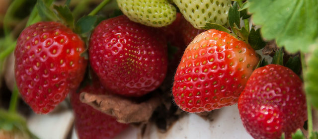 Abundant Life Organic Farms