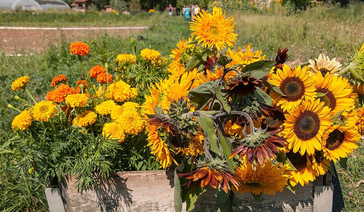 Zephyros Farm Flowers image