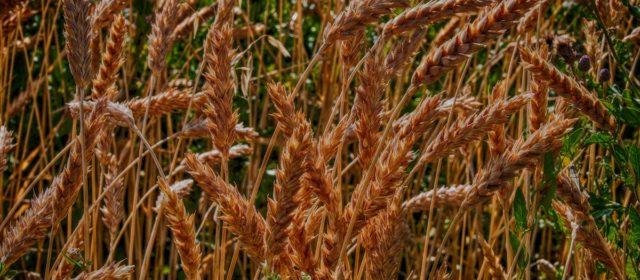 Clove, Canes & Grains