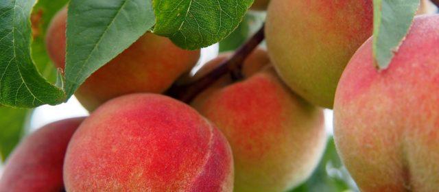 Topp Fruits, LLC