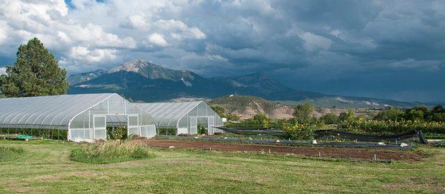 Twisted Root Organic Farm
