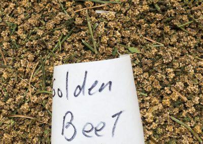 Golden Beet seeds