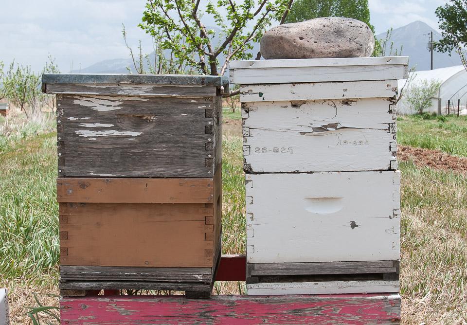 Beekeeping Workshop image