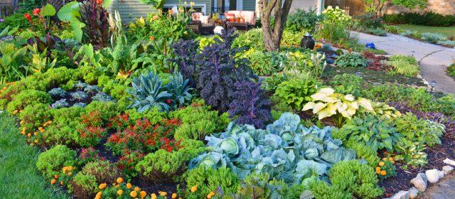 Paonia Farm and Home Organics