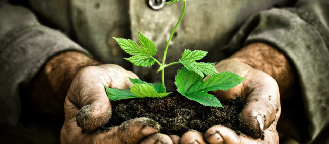Paonia Soil Company