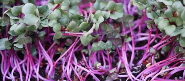 Brush Creek Microgreens LLC