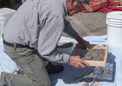 Seed School image of sorghum seeds