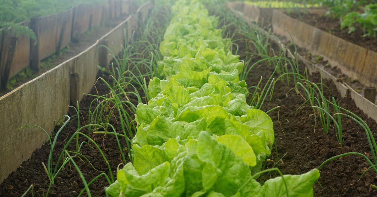 Soil Not Dirt Farm Facebook image