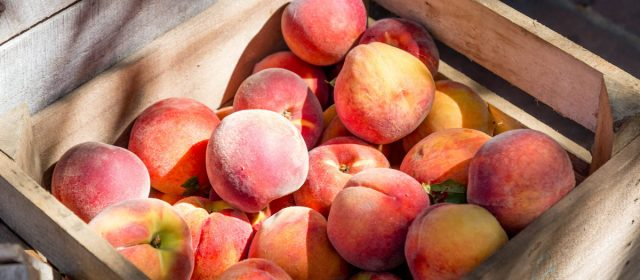 Peach, Love and Understanding Farm