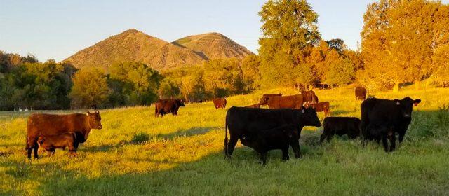 Wrich Ranches LLC