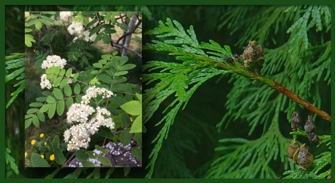 Tree Medicine image