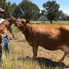 Jake Takiff is Part of a Trend Towards Regenerative Farming